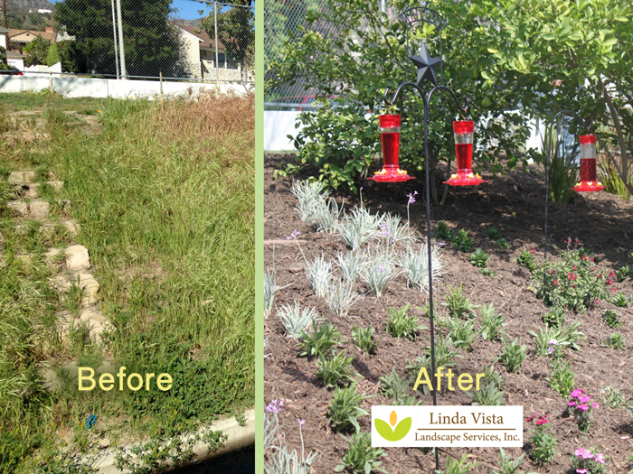 Linda Vista Landscape helps Jefferson Elementary School create a hummingbird garden