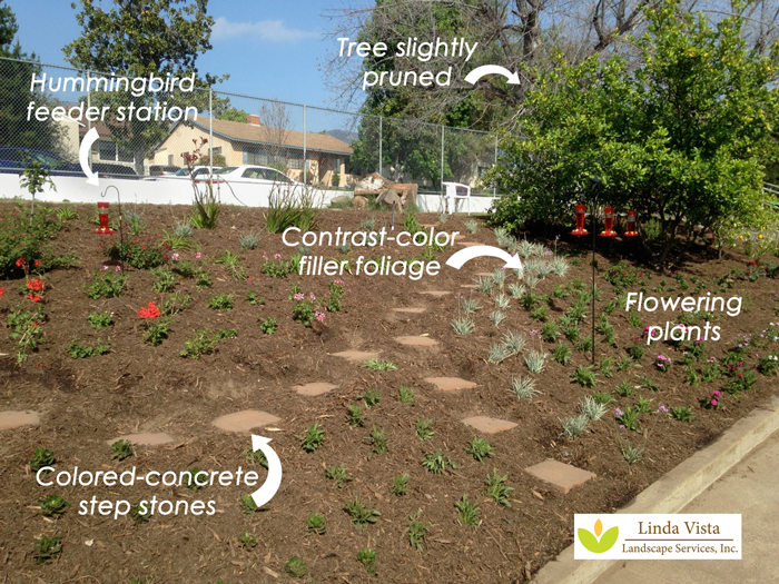 hummingbird school garden created by Linda Vista Landscape
