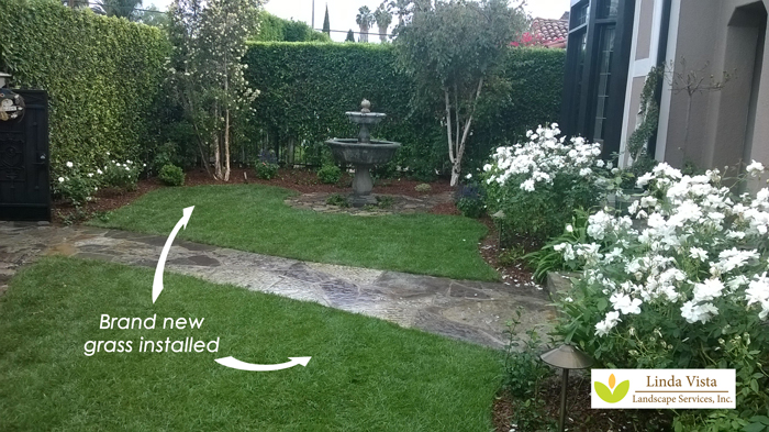 new grass installation by Linda Vista Landscape