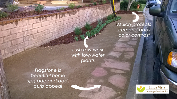 lush row work with water conserving plants by Linda Vista Landscape