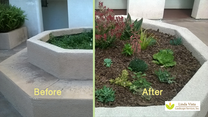 Before and after of drought tolerant plants for Los Angeles condos.