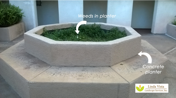 Concrete planter in Los Angeles