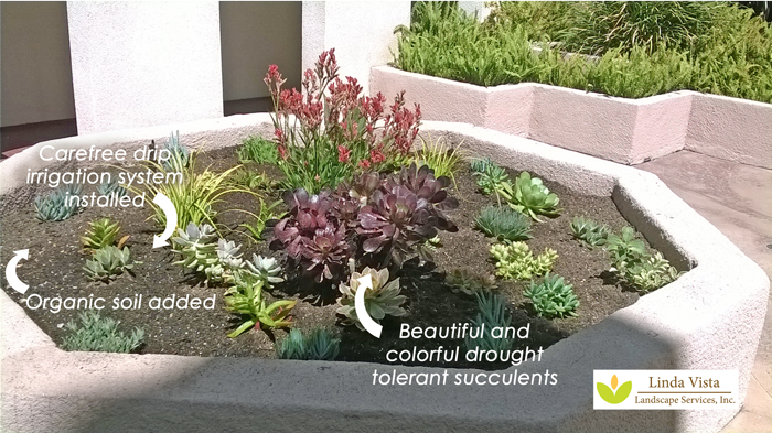Drought tolerant plants for los angeles in this re-landscaped concrete planter