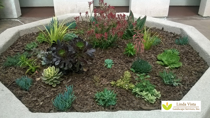 concrete planter with drought tolerant plants for los angeles