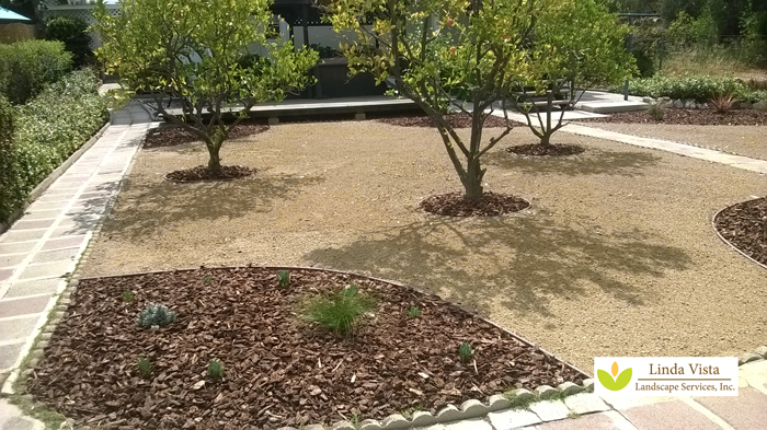 Drought tolerant California backyard orchard design.