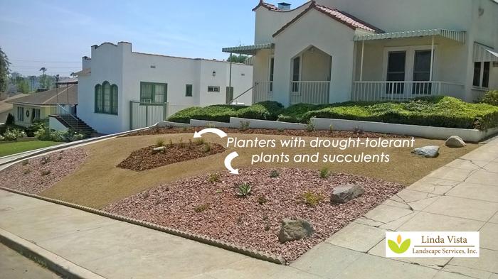 Easy low water plants in drought tolerant landscape.
