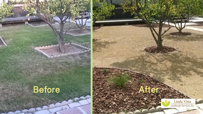 Before and after of renovated California backyard orchard.