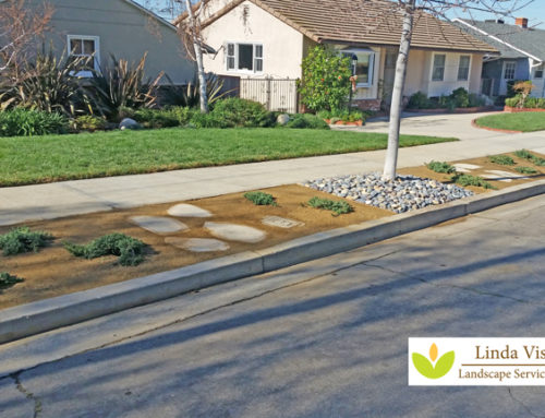 Drought Tolerant Parkway Transformation