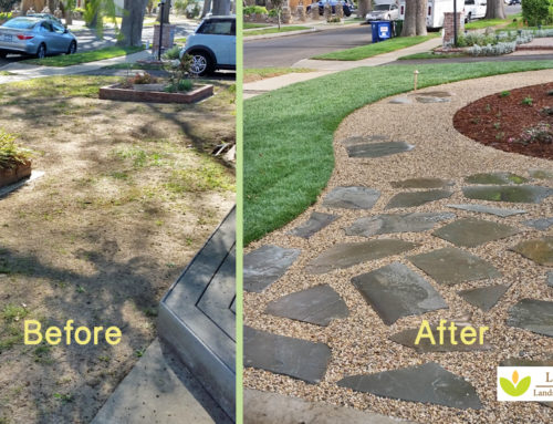 Curb Enhancing Xeriscape in Southern California